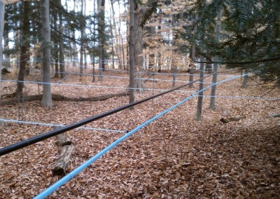 maple sap lines