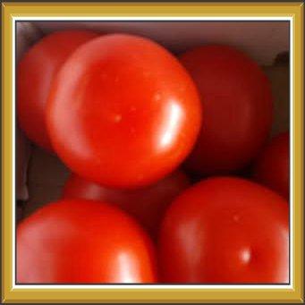 Plants & Produce